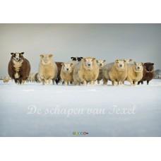 Texelse schapen op canvas
